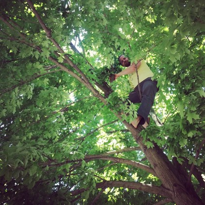 Andrew climbing the tree, fetching a swarm, photo by Kim Giannone